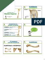 Esqueleto Apendicular Membro Superior