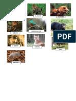 ANIMALES DE CUTERVO.docx