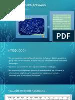 Los Microrganimos PDF Presentacion