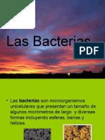 Las Bacterias y los virus. Mª C.