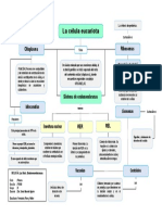 Mapa Conceptual - 10 Sistema de Endomembranas