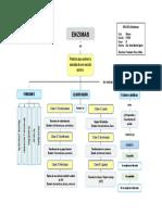 Mapa Conceptual - 5 Enzimas
