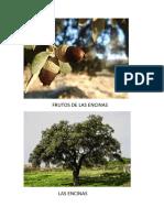 FRUTOS DE LAS ENCINAS.docx