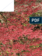 Acer palmatum 'Chishio Improved'.pdf