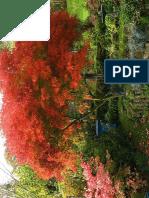 Acer palmatum dissec. Seiryu.pdf