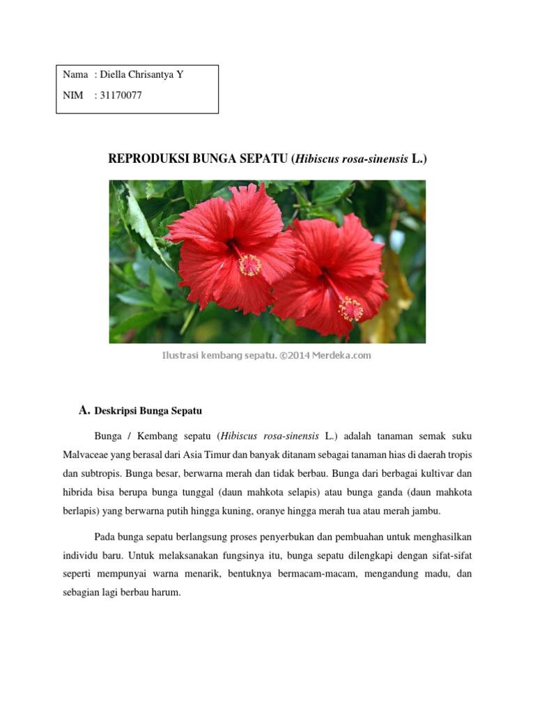 373100317 Reproduksi Bunga Sepatu Docx