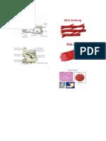 Gambar Tulang Dan Otot