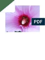 Foto floare