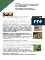 15 MEDICAMENTOS CONVENCIONALES.docx