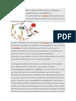 asd.docx