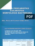 2. Morfologia bacteriana.pptx