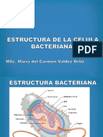3. Estruactura Bacteriana.pptx
