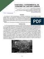Odriozola 12-lantana_camara.pdf