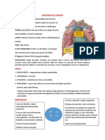 Anatomia Del Corazon i y II