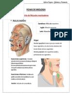 Fichas de Miologia.docx