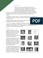 Apéndices auriculares accesorios.docx
