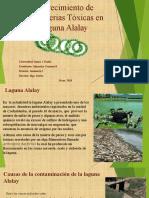 Alto Crecimiento de Cianobacterias Tóxicas en la Laguna.pptx