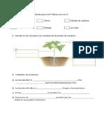 prueba ciencias plantas.docx