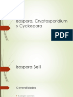 4.- Isospora, Cryptosporidium y Cyclospora