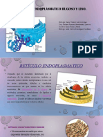 Dialnet EvaluacionDeLaProduccionDeProteasasEnDosCepasDeMuc 5381347 (1)
