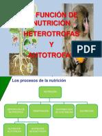 La Funcion de Nutricion