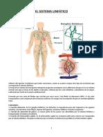 CLASE 13 Anatomia