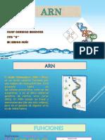 ARN.pptx