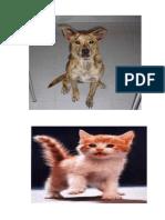 animales ornamentales.docx