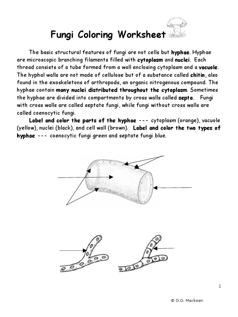 worksheet Fungi Worksheet fungi coloring worksheet answer key due precommunity printables worksheets