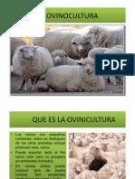 La Ovinocultura i