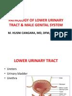 male genital system.pptx