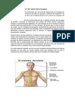 El Sistema Nervioso (Columna Caplinito)