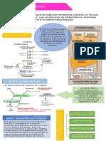 Infografía Super Resumen COLESTEROL