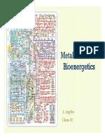 3) Metabolism and Bioenergetics