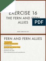 Fern and Fern Allies