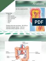 Lo Anatomi Fisiologi