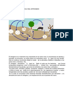 ciclo del fosforo.docx