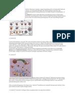 Sistem kekebalan tubuh pada vertebrata.docx