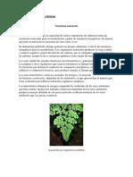 Nutrición Heterótrofa y Autótrofa