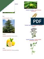 Plantas Medicinales Dibujo 02