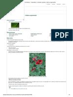 Portal Do Professor - Fotossíntese_ o _alimento_ Da Planta - História e Experimentos