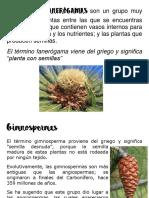 Plantas gimnoespermas