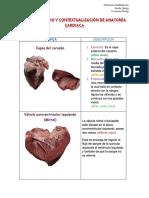 Guia de Estudio y Contextualización de Anatomía Cardiaca