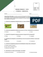 Prueba N°6 invertebrados