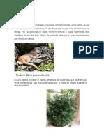Flora y Fauna en Peligro de Extincion