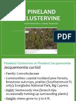 Pinelands Clustervine - Ken.pptx