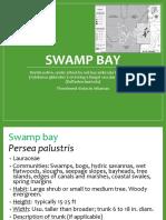 Swamp Bay