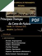 Principais Doencas Da Cana-De-Acucar