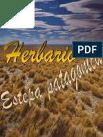 herbario estepa patagonica
