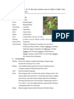 Catharanthus roseus.docx